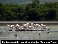 Od oko 526 vrsta ptica u EU, oko 250 vrsta je registrovano je na Solani, a vodeća vrsta je flamingos