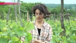 Биологическое вино: как в Грузии возвращаются к традициям предков