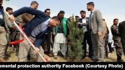 آغاز کمپاین نهال شانی در افغانستان