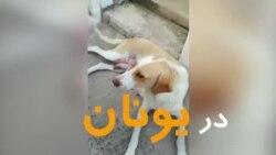 بچه گربه در آغوش سگ مادر