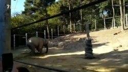 Уникальная операция в Тбилисском зоопарке