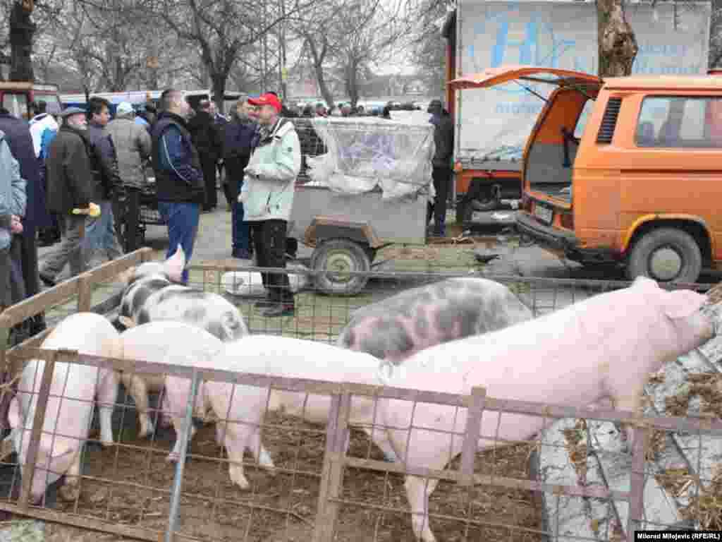 Banjaluka, 18.02.2011. Foto: Milorad Milojević