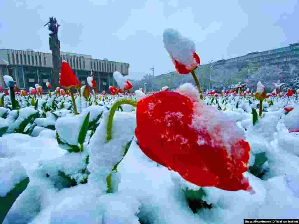 Бишкектеги Улуттук филармониянын астындагы жоогазындар.