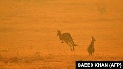 Beg ljudi i životinja od vatrene stihije u Australiji