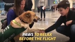 Paws To Relax: Dogs Ease Stress At Russian Airport
