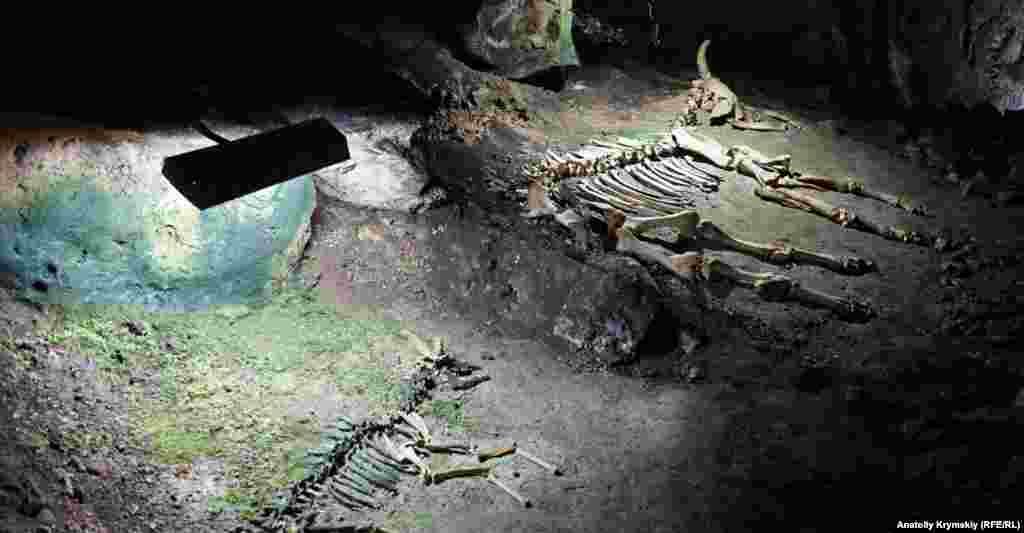 В Эмине-Баир-Хосаре экспонируются также останки доисторический сайги (слева) и зубра
