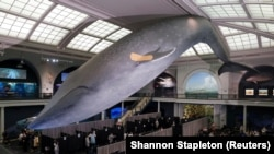 Centru de vaccinare la Muzeul american de istorie naturală, New York 23 aprilie 2021. REUTERS/Shannon Stapleton.