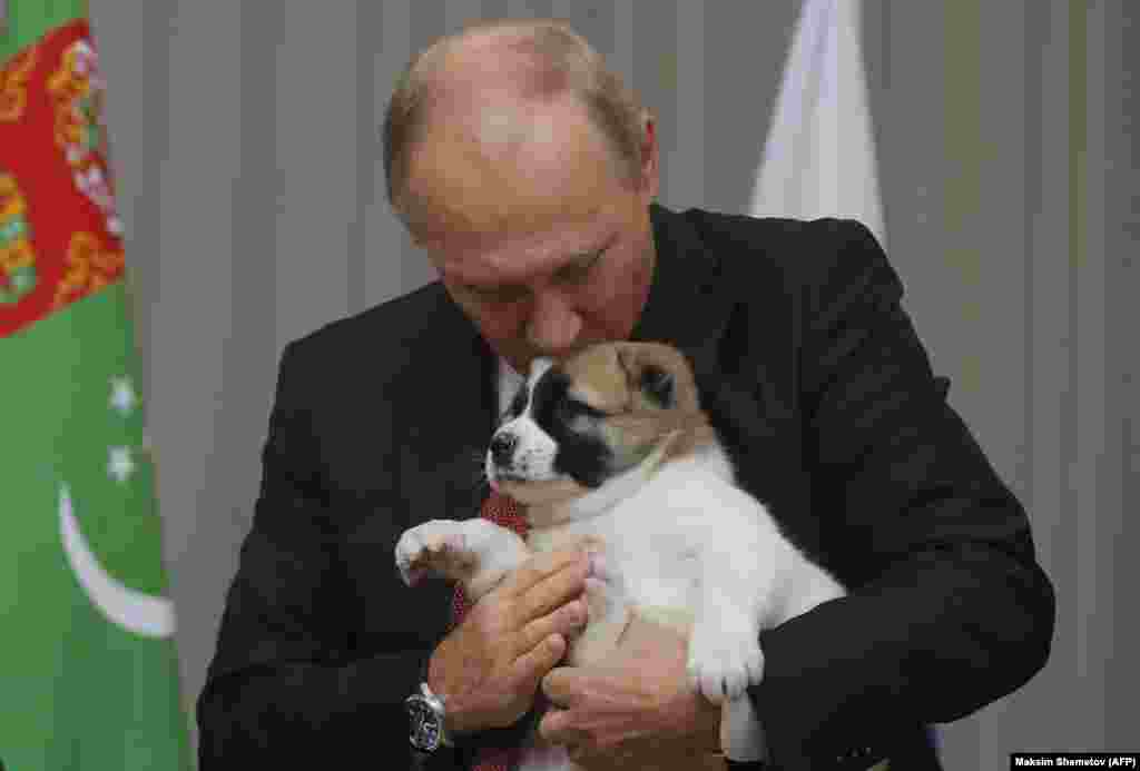 Владимир Путин взяв Верного из рук своего туркменского коллеги Гурбангулы Бердымухамедова поцеловал нового друга в голову.