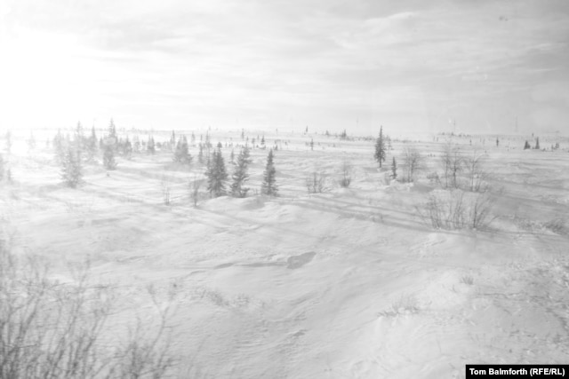 """We haven't yet crossed out of the taiga into the tundra, as there are still trees."""