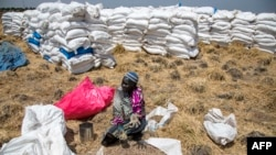 A woman collects grains left on the ground after a food distribution drop last week in South Sudan, which has been declared the site of the world's first famine in six years, affecting about 100,000 people.