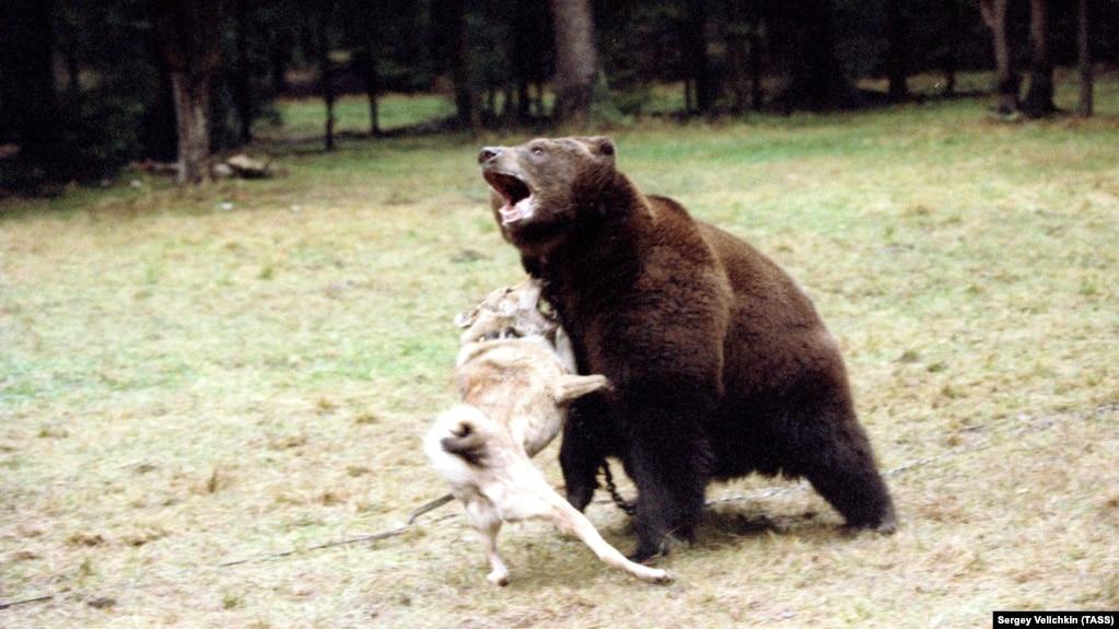 Владимир арахлей охотничьи лайки россии скачать книгу
