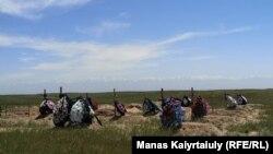Коронавирустан қайтыс болғандар жерленген зират. Алматы облысы Қараой ауылы, 25 мамыр 2020 жыл.