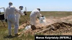 Коронавирустан қайтыс болғандарды жерлеуге арналған зират. Қараой ауылының маңы, Алматы облысы, 25 мамыр 2020 жыл. Азаттық зерттеуі зиратта ресми деректегіден көп адам жерленгенін көрсетті.