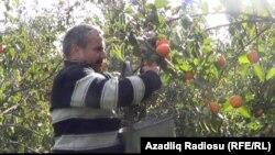 Житель села Сейфели Бахрам Аббасалиев