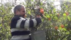 Serap Öztürk: 'Türkiyədə fermerlər nağd puldan tutmuş aqromühəndis məsləhətinədək dəstək alırlar'