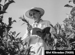 Soviet geneticist Kseniya Bakhtadze on a tea plantation in Georgia in 1967.