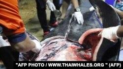 Погибший кит, в желудке которого после вскрытия найдены десятки кусков пластикового мусора весом восемь килограммов.