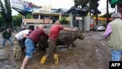 Грузия -- Зоопарктан качкан бегемотту кармоо. Тбилиси, 14-июнь, 2015.