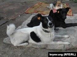 Питомцы приюта, организованного Благотворительным фондом помощи бездомным животным