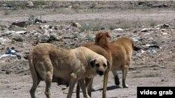 Убитые собаки заносятся в акт, а затем закапываются