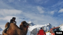 A tourist rides a camel at the Dombai ski resort in Russia's North Caucasus republic of Karachayevo-Cherkessia.
