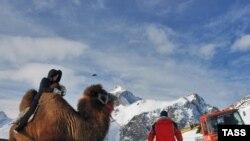 A tourist rides a camel at the Dombai ski resort in Russia's North Caucasus republic of Karachayevo-Cherkessia.