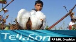 TeliaSonera - спонсор соревнований по сбору хлопка в Узбекистане