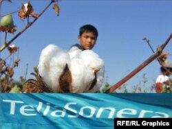 Логотип телекомпании TeliaSonera, которая выступила спонсором кампании по уборке хлопка в Узбекистане. Иллюстративное фото.