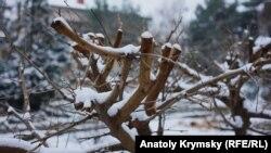 Обрізання дерев на березі Салгира, Сімферополь