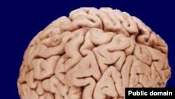 Мозг человека - самое сложное и загадочное создание природы.