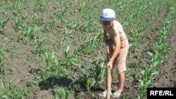 Moldova: Andrei Cibotaru, copil obligat să muncească child obliged to work, iunie 2009.