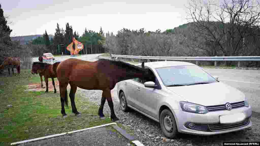 Коні на трасі Алушта-Судак