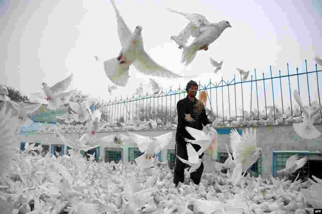 An Afghan man feeds pigeons in the courtyard of the the famous Blue Mosque in Mazar-e Sharif. (AFP/Farshad Usyan)