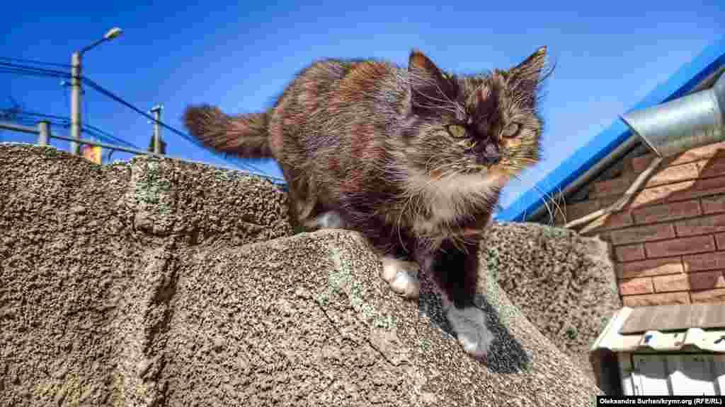 Судакский кот греется на солнце