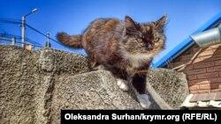 Вулічны кот, ілюстрацыйнае фота