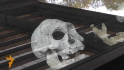 Ancient Skull In Georgia Gives Glimpse Of Human Evolution