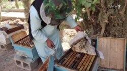 بازار کمرنگ اما تولید فراوان عسل در فراه