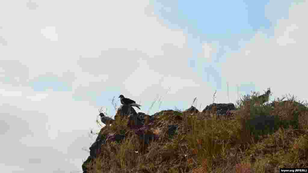 Дикие голуби сидят на скале