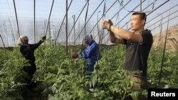 Китайский фермер Миша работает в Таджикистане. Фото: REUTERS/Nozim Kalandrov