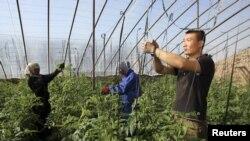 Китайский фермер Миша в таджикской Бутонкале. Автор фото: Нозим Каландаров