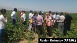 Кыргызстандык дыйкандар Тажикстандын тажрыйбасы менен таанышты