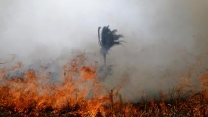 Vatra guta šumu Amazona