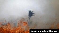 Pădurea amazoniană este cuprinsă de incendii.