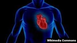 29 cентября отмечается Всемирный день сердца 2013.