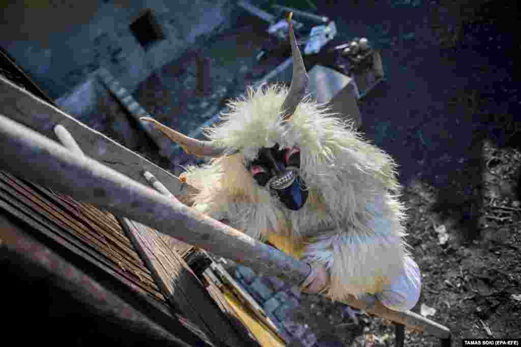 A man wears a busho mask and a costume made of a sheep pelt while climbing up a ladder outside a barn in Mohacs, Hungary on the first day of carnival. The traditional Busho carnival, which marks the end of winter, dates back to the 16th century. According to local legend, members of an ethnic South Slavic group living in Mohacs at the time dressed up in similar costumes and wore wooden masks to scare away Ottoman invaders, who mistook them for demons. (epa-EFE/Tamas Soki)