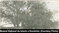 Amintiri din război, Frunzeasca 1917