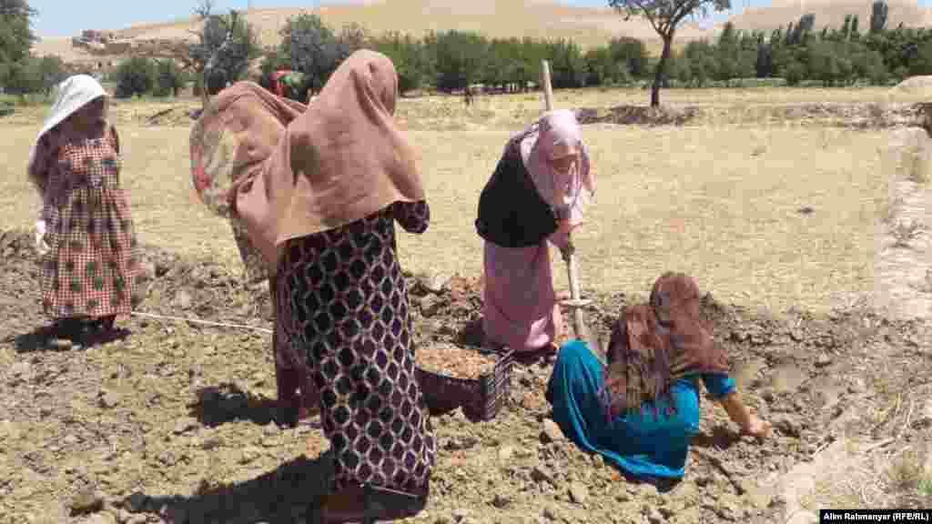 خانم ها در حال آماده کردن زمین برای کشت در یکی از روستا های ولایت سرپل.
