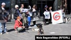 На 4 апреля запланирована акция в защиту домашних и бездомных животных. Желание выйти на улицу в социальной сети Facebook подтвердили уже тысячи людей