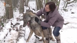 Belarusian Activist Takes To The Wolves
