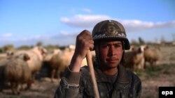 Сирийский пастух. Снимок сделан 16 марта близ Дамаска